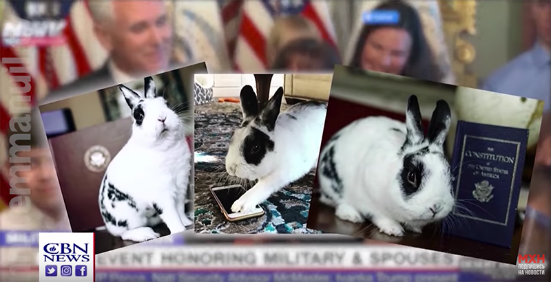Кролик семьи Майка Пенса собирает деньги на благотворительность